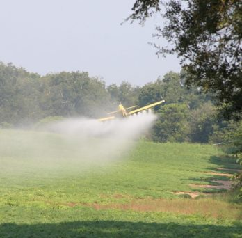 A plane sprays pesticide from the air onto a field of crops.